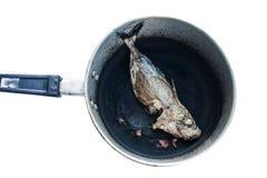 Burn out fish Royalty Free Stock Photos