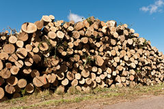 Burn pile Stock Images