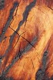 Burn wood texture Stock Photo