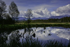 |Burnaby湖 免版税库存图片