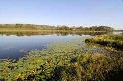 Burnaby sjö i höst Royaltyfri Bild