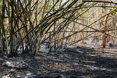 Burned of bamboo area. Royalty Free Stock Photography