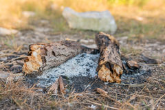 Burned bonfire. Ash around burned down campfire at sunset Royalty Free Stock Image