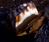 Burned book Stock Image