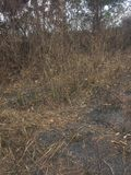 Burned bush royalty free stock photography