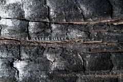 Burned Charred Wood Texture Royalty Free Stock Photography