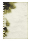 Burned, destroyed sheet of lined paper. Charred. Blank. Isolated. Stock Images