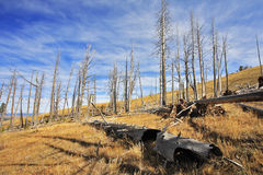 The burned down wood in the autumn Royalty Free Stock Photography