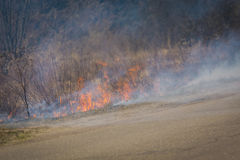 Burned Dry Grass Royalty Free Stock Photo