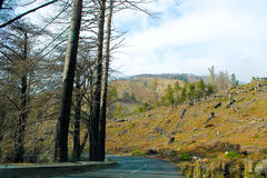 Burned and felled trees. By the roadside in Madeira Royalty Free Stock Photography