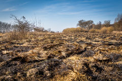 Burned field. In the beginning of spring. Landscape photography Stock Photos