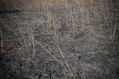 Burned field and scorched earth. After fire blaze detail Stock Photos
