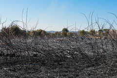 Burned field and scorched earth. Landscape view of a burned field and scorched earth after fire blaze, cityscape in background Royalty Free Stock Images