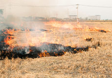 Burned fields Royalty Free Stock Image