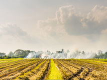 Burned fields in Thailand Stock Images