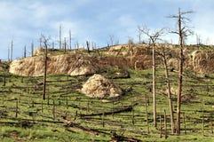 Burned forest Stock Image