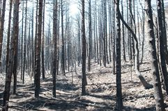 Burned forest Royalty Free Stock Images