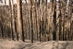 Burned Forest Royalty Free Stock Photos