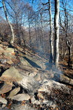 Burned forest Stock Photography