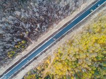 Burned forest from above Royalty Free Stock Image