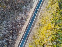 Burned forest from above Stock Image