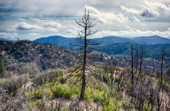 Burned Forest in California Hills Royalty Free Stock Photo