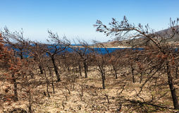 Burned forest on Crete, Greece. Burned forest at the coast on Crete, Greece royalty free stock image