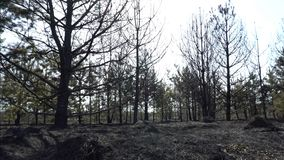 Burned forest and field after wildfire, black ground, ashes, smoke, dangerous draught weather, ecological catastrophe. Disaster, global warming, video stock video