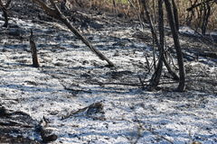 Burned Forest. Image of forest after fire Royalty Free Stock Image