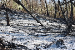 Burned Forest. Image of forest after fire Stock Photo