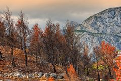 Burned forest and mountain area, landscape view after fire in Croatia. Landscape view of forest devastated by the fire in the southern part of Croatia stock photos
