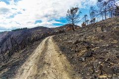Burned forest in the mountains Stock Images