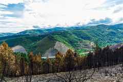 Burned forest in the mountains Royalty Free Stock Image