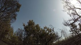 Burned forest, panorama rotating time lapse of trees after wildfire, ecological catastrophe, disaster. Video stock footage