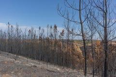Burned forest in Portugal. Burned forest. Burned forest in Portugal. forest stock images