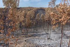Burned forest in Portugal. forest. Burned forest in Portugal. Burned forest stock image