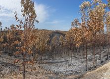 Burned forest in Portugal. forest. Burned forest in Portugal. Burned forest royalty free stock photos