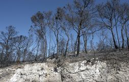 Burned forest and scarp Stock Images