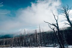 Burned forest at winter