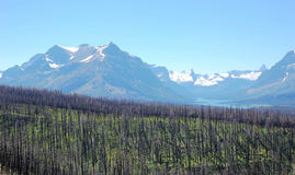 Burned forests and snow mountains Stock Images