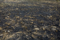 Burned grass and ground smut Royalty Free Stock Photos