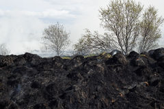 Burned grass residues Royalty Free Stock Photo