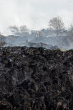 Burned grass residues Stock Image