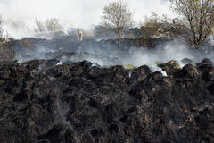Burned grass residues Royalty Free Stock Photography