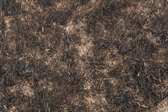 Burned Grass Stock Photo