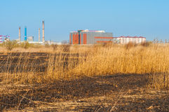 Burned grass in Vacaresti delta from Bucharest. In sunshine light Royalty Free Stock Photo