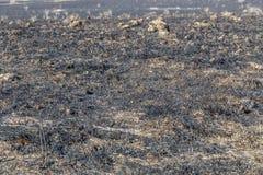 Burned Grassland Royalty Free Stock Photos