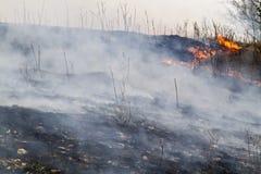Burned grassland Stock Photo