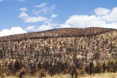 Burned Hillside Stock Images