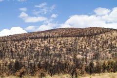Burned Hillside stock images